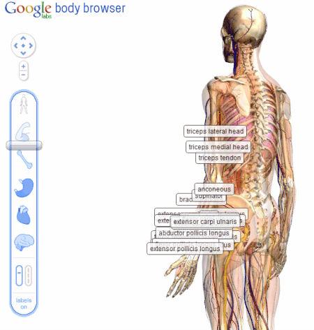 Google Dentro Do Corpo Humano